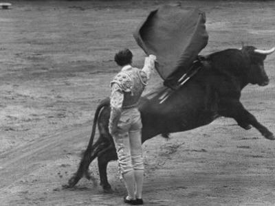 Bull Fighter Manolete Raising His Cape as Bull Charges Past Him in Bull Ring During Bull Fight