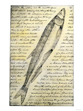 https://imgc.allpostersimages.com/img/posters/william-clark-s-sketch-of-a-trout-in-the-lewis-and-clark-expedition-diary_u-L-P26TC10.jpg?p=0