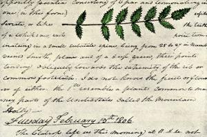 William Clark's Sketch of an Evergreen Shrub Leaf in the Lewis and Clark Expedition Diary, c.1806