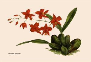 Orchid: Cochlioda Notzliana by William Forsell Kirby