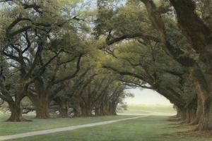 Alley of the Oaks by William Guion