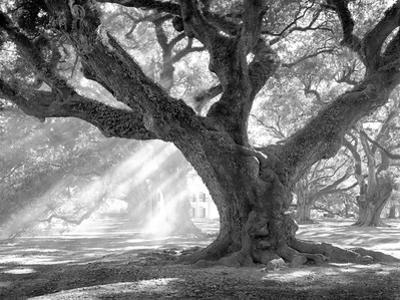 Andrew Oak, Afternoon Light by William Guion