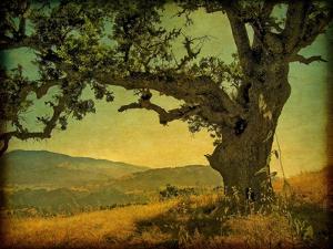 Blue Oak Hilltop by William Guion