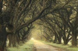 Evergreen Alley by William Guion