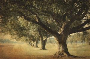 Island Oak by William Guion