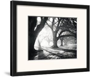 Oak Alley, Light and Shadows by William Guion