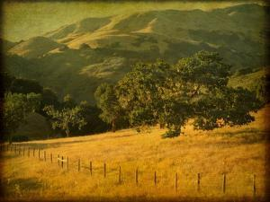 Oak and Fence by William Guion