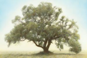 Oak & Blue Sky by William Guion