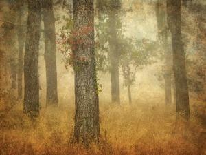 Oak Grove in Fog by William Guion