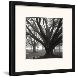 Oak Grove, Winter by William Guion