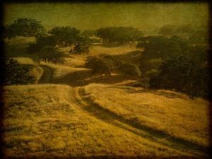 Ranch Road and Oak Savannah by William Guion