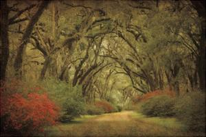 Road Lined With Oaks & Flowers by William Guion
