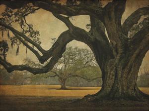 Two Oaks in Rain, Audubon Gardens by William Guion