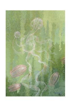 A Painting of Two Species of Comb-Jellies by William H. Crowder