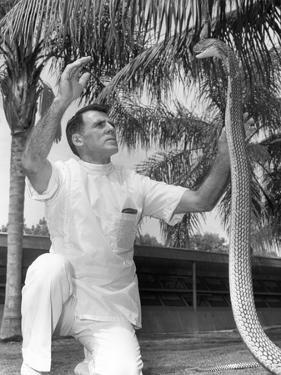 William Haast Entices a Cobra at the Miami Serpentarium, C.1965