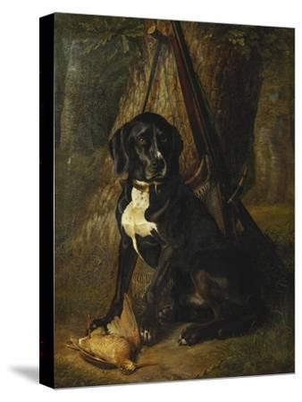 A Gun Dog with a Woodcock