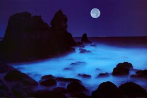 California Coast by William Hartshorn