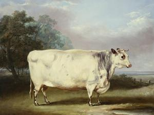 A Prize Cow by William Henry Davis