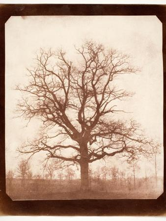 Oak Tree in Winter, Early 1840s