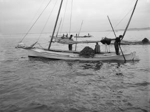 Oyster Dredging. C.1890-1910 by William Henry Jackson