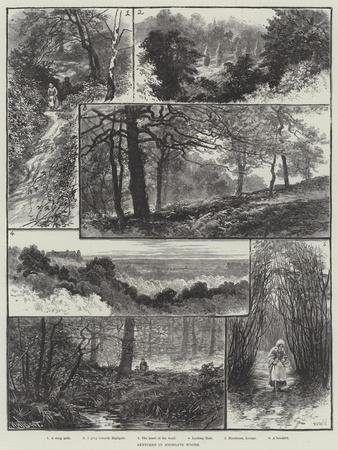 Sketches in Highgate Woods