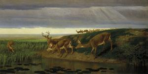 Deer on the Prairie, 1884 by William Holbrook Beard