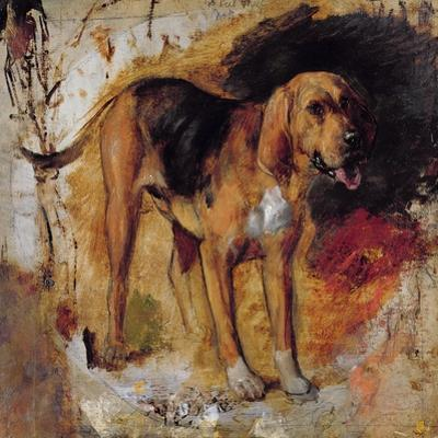 A Study of a Bloodhound, 1848 by William Holman Hunt