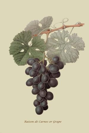 Raison De Carnes or Grape by William Hooker