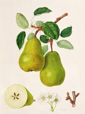 The D'Auch Pear, 1817 by William Hooker