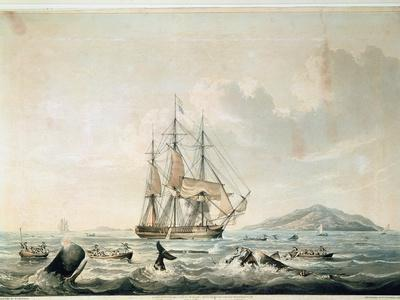 South Sea Whale Fishery, Engraved by T. Sutherland, 1825
