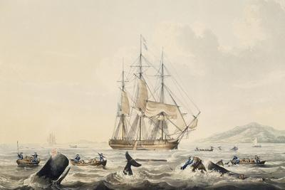 Whaling in South Seas, by William John Huggins (1781-1845), 44X57 Cm, 19th Century