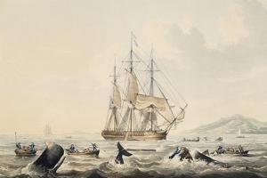 Whaling in South Seas, by William John Huggins (1781-1845), 44X57 Cm, 19th Century by William John Huggins