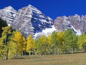 Aspen Trees Before Maroon Peaks by William Manning