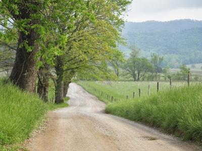 Rural Road in Cades Cove by William Manning