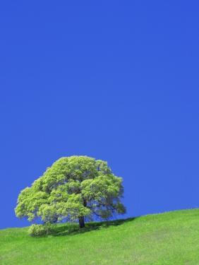Tree and Meadow by William Manning