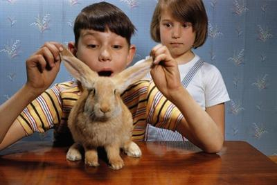 Annoying Brother Playing with His Sister's Pet Rabbit by William P. Gottlieb