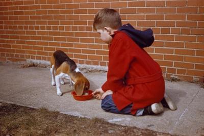 Boy Feeding Dog on Sidewalk by William P. Gottlieb