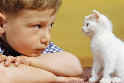 Boy Looking at White Kitten by William P. Gottlieb