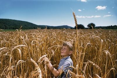 Boy Standing in Field of Wheat by William P. Gottlieb