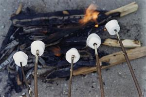 Cooking Marshmallows over Campfire by William P. Gottlieb