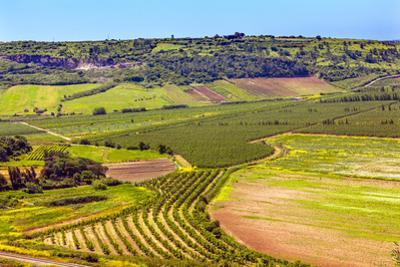 Countryside Farmland, Obidos, Portugal. by William Perry