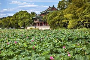 Red Pavilion Lotus Pads Garden Summer Palace Park, Beijing, China Willow Green Trees by William Perry