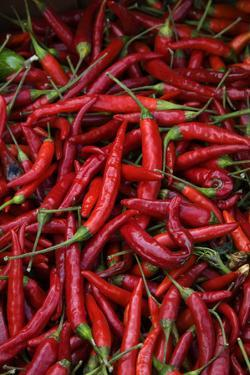 Spicy Hot Red Cayenne Chili Peppers by William Perry