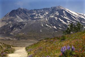 Wildflowers Trail, Mount Saint Helens Volcano National Park, Washington State by William Perry