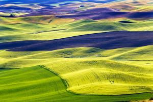 Yellow Green Wheat Fields Black Dirt Fallow Land from Steptoe Butte at Palouse, Washington State by William Perry