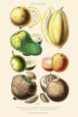 Fruits and Nuts. Mammee, Pawpaw, Soursop, Negro Peach, Granadilla, Brazil Nut, Zabucajo by William Rhind