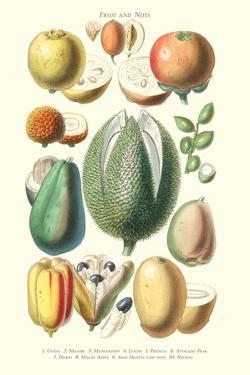 Fruits and Nuts by William Rhind