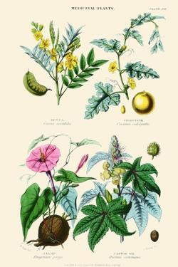 Medicinal Plants. Senna, Colocynth, Jalap, Castor Oil by William Rhind