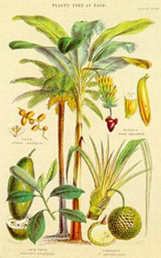 Plants Used As Food by William Rhind