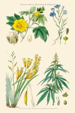 Plants Used in Clothing and Cordage. Cotton, Flax, New Zealand Flax, Cannabis by William Rhind
